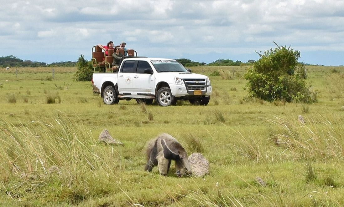 Wild Llanos Tours and Safaris Sustainability Ecotourism Casanare Llanos Colombia